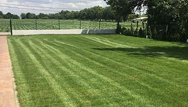 Postavljanje tepih trave